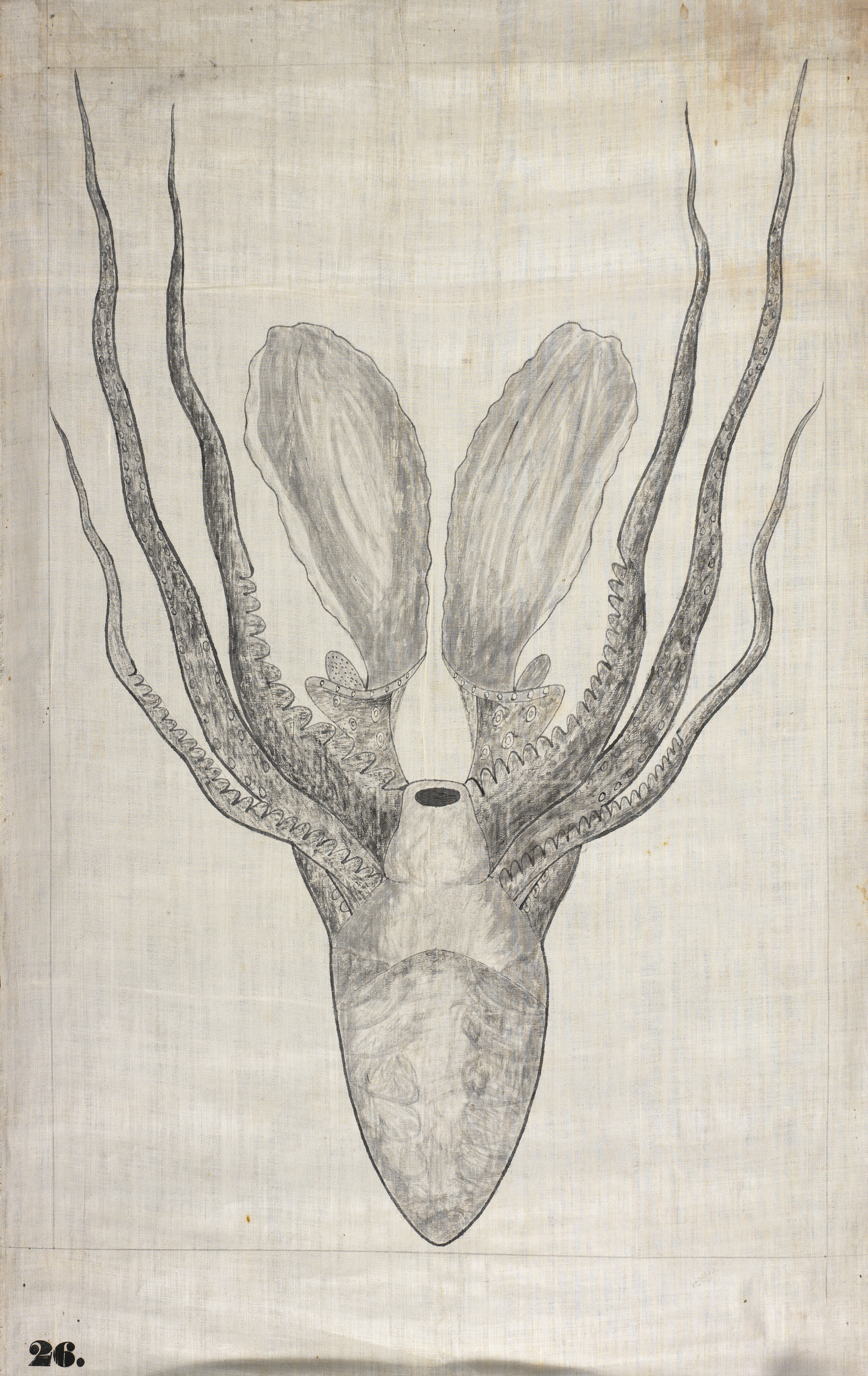 """26. Octopus Orra White Hitchcock (1796–1863) Amherst, Massachusetts 1828–1840 Pen and ink and ink wash on cotton 28 3/4 x 20"""" Amherst College Archives & Special Collections"""
